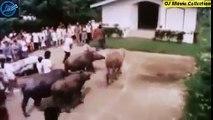 OJMovie Collection - Alyas Pogi  Birador ng Nueva Ecija (1990) Ramon 'Bong' Revilla Jr. part 1/2