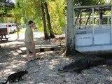 Un chat défie un alligator mais ce qui se passe ensuite est totalement inattendu