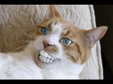 TRY NOT TO LAUGH or GRIN - Funny Cats & Dog Vines 2017
