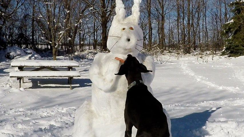 Blind old Great Dane caught stealing from Easter Bunny