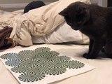 Victime d'une illusion d'optique, ce chat devient complétement dingue !