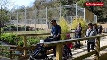 Zoo de Trégomeur (22). Trois lionnes pour les dix ans du parc