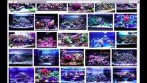 【サンゴ水槽】他人のレイアウトをパクろうとしたら、予想外に騙された。
