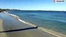 Un chien joue avec un dauphin dans l'eau