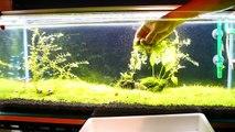 【水槽147】90cm風山石レイアウト② 二階建ての水草育成 2nd floor plant cultivation