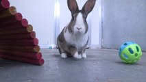 CBBC Newsround_ RSPCA warns 'bunnies are for life, not just for Easter' 12Apr17