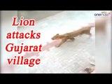 Lioness attacks village in Gujarat, Creating panic, Watch Video | Oneindia News