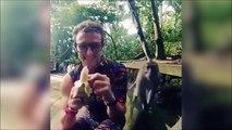 Il se fait voler sa banane par un singe gourmand