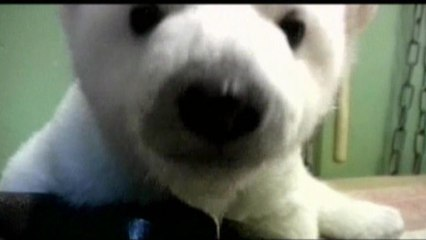 Knut, der kleine Kuschelbär - Knut geht's gut
