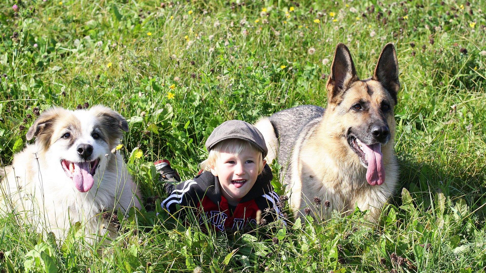Pets Channel , Century pets Complete pet care guide