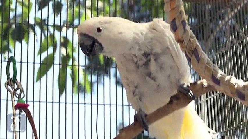 Exotic Birds, funny animal videos