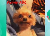 Funny dogs ,dogs videos ,dogs, hot funny, Funny dogs videos hot funny animals part 10