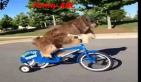 Funny dogs ,dogs videos ,dogs, hot funny, Funny dogs videos hot funny animals part 13