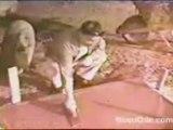 pub  - Clark Chewing Gum 1966