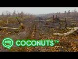 Deforestation: Aerial view of Borneo's burnt rainforests | Coconuts TV