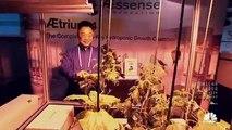 Marijuana Country The Cannabis Boom - Documentaries About Drugs http://BestDramaTv.Net