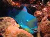 Australia Facts, The Great Barrier Reef - National Geographic Documentary http://BestDramaTv.Net