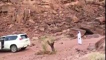 Régis déracine un arbre avec sa voiture