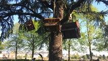 Des pianos perchés dans les arbres du parc du château