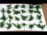 Reggio Calabria - Coltiva marijuana in casa, arrestato 27enne (21.04.17)