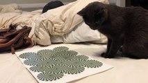 Showed my cat an optical illusion last night
