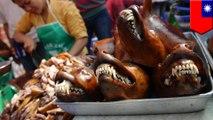 Taiwan melarang konsumsi daging anjing & kucing, menjadi negara pertama di Asia yang melakukannya - Tomonews