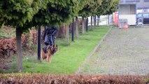 Mons Expo - un chien pisteur sur le site