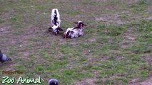Happy goats in farm animals - Funn