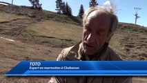 Alpes-de-Haute-Provence : le réveil d'une marmotte jour après jour à Chabanon
