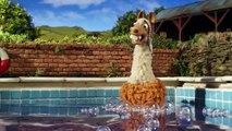 Memenuhi llamas - Farmers Llamas - Sh She