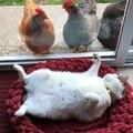 Salut les poules, vous regardez quoi comme ça?!