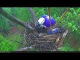 Rescuer Helps Injured Eaglet in DC Eagle Cam Nest