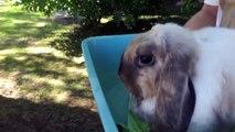 Et soins vérification animal de compagnie lapin réal vétérinaire visite ✚ vaccination ✚