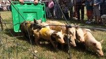 Ambiance familiale et bon enfant à la fête du cochon de Carrouges