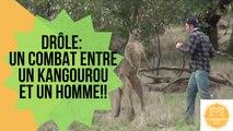 Drôle- Un combat entre un Kangourou et un Homme!!