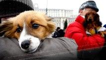 Tal Cão, Tal Dono