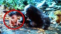 Hayvanlar Tarafından Büyütülmüş 10 Çocuk