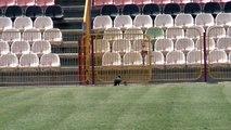 Rat Takes on Crow