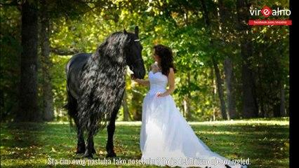 Najljepši konj na svijetu