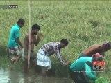 কিশোরগঞ্জ-নাটোরে বন্যা পরিস্থিতি অপরিবর্তিত