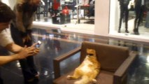 Cool Cat Chills at Mall