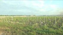 Il faut sauver les vignes du Médoc du gel - Vignoble