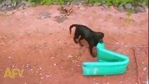 Cão salva-vidas não tem descanso ! Também Salva quem não precisa de ser salvo !
