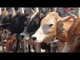 Beef Banned by Jammu & Kashmir High court