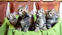 Funny Cats Compilation 2015 Funny Cats videos Funny Cat Funny Cats Compilation 2015 Animals
