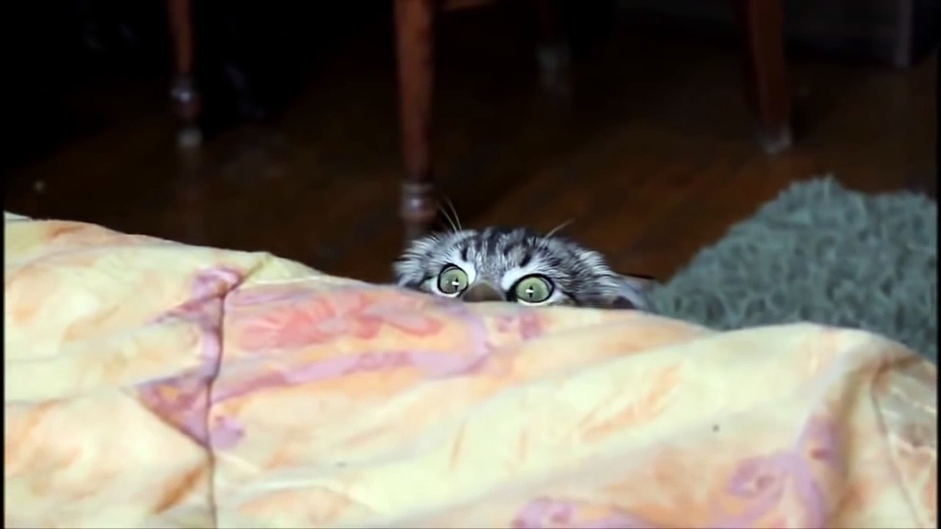 OMG! Cats on Youtube   Funny Cats - New Funny Cats Video - Funny Animals - Funny Videos