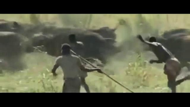African men's attack Animals
