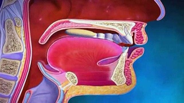 La digestion expliquée en vidéo