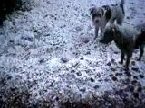 Bebel & Moogly leur 1ère fois sous la neige
