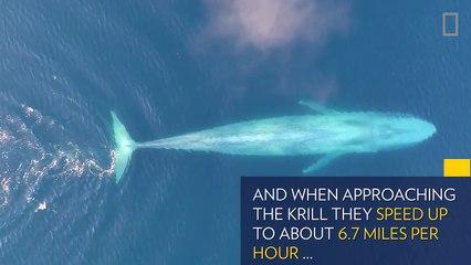 Ils distinguent une forme énorme en filmant l'océan, ce qui sort de l'eau est fascinant, ne clignez pas des yeux!